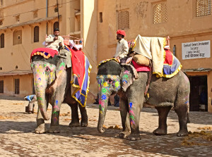 Elephant Ride by Lainie Overbeck