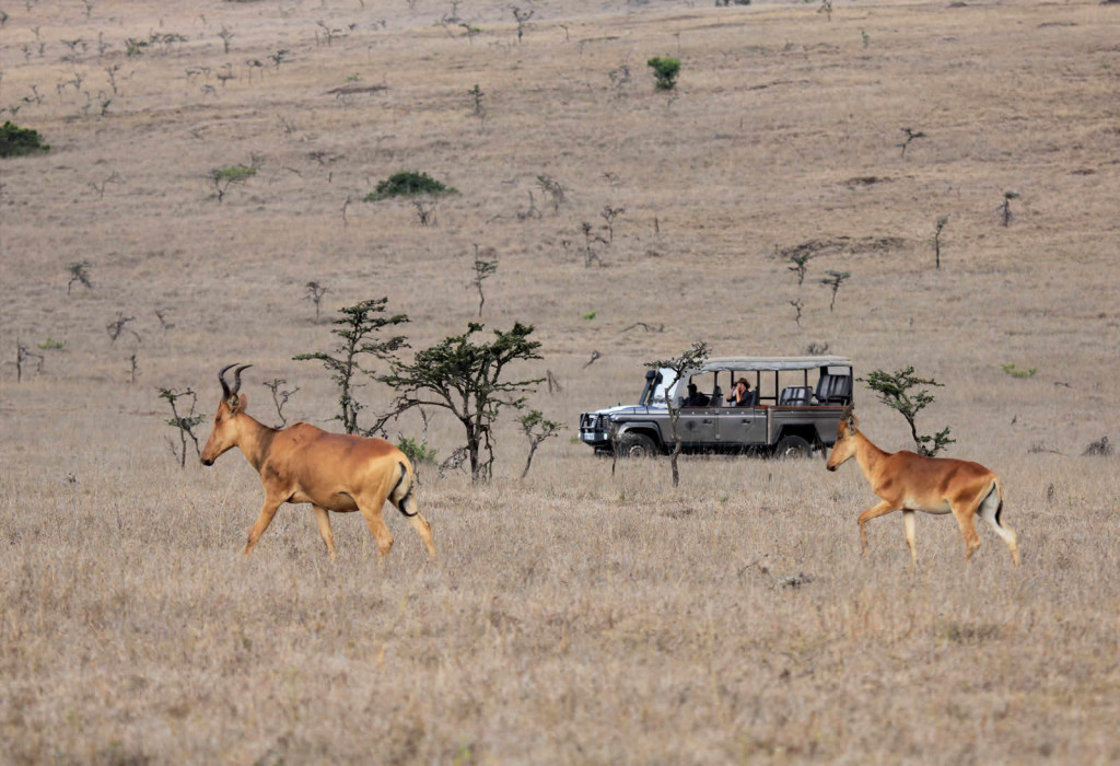 Hartebeest at Sirai Camp
