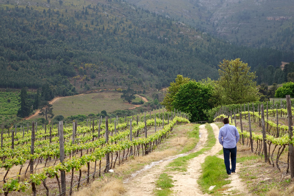 A stroll in the winelands