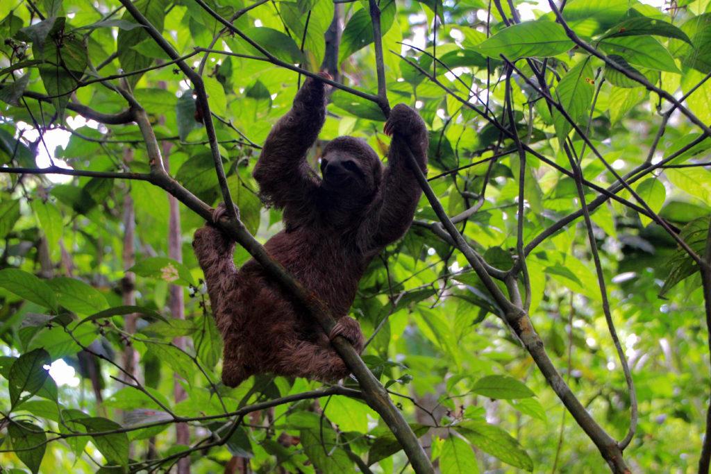 Sloth by Kayla Torgerson