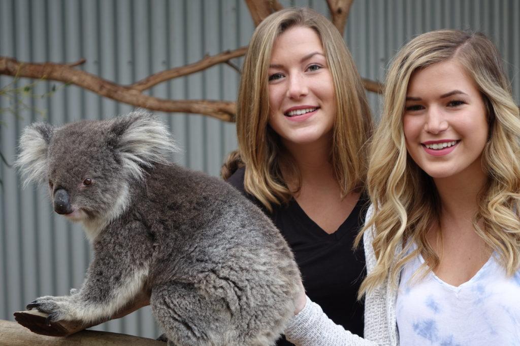Kangaroo Island_KI Wildlife Park_Koala