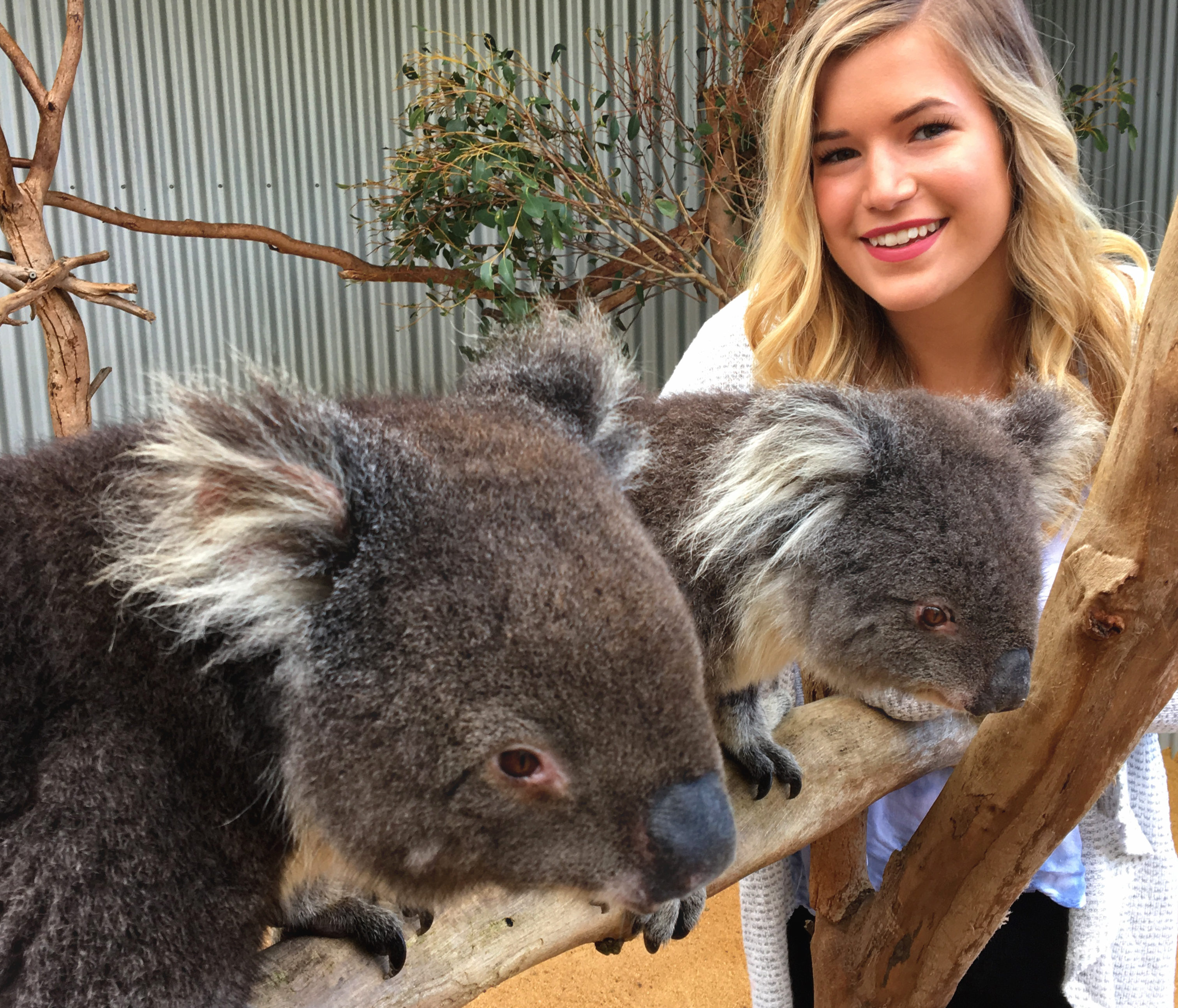 Koalas and Kyndall