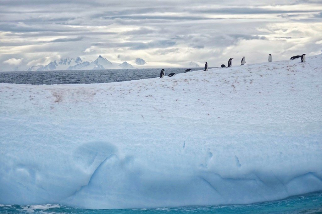 Iceberg and Penguins