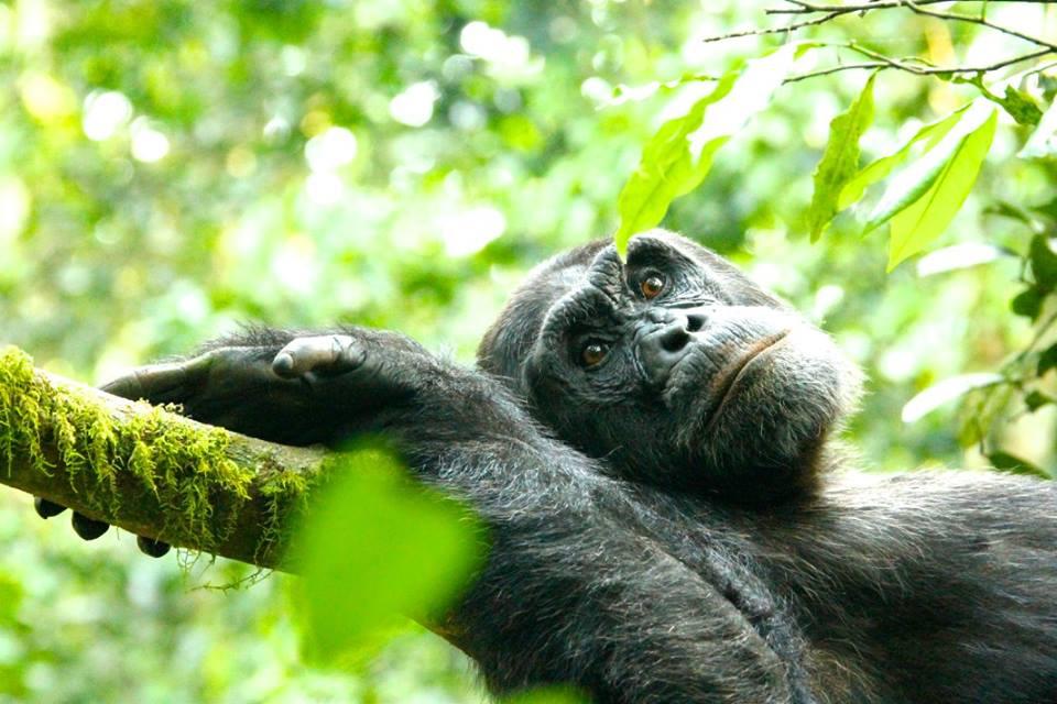 chimp 6