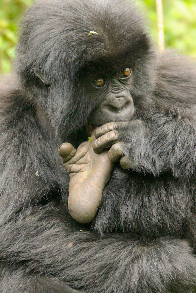 gorilla-foot