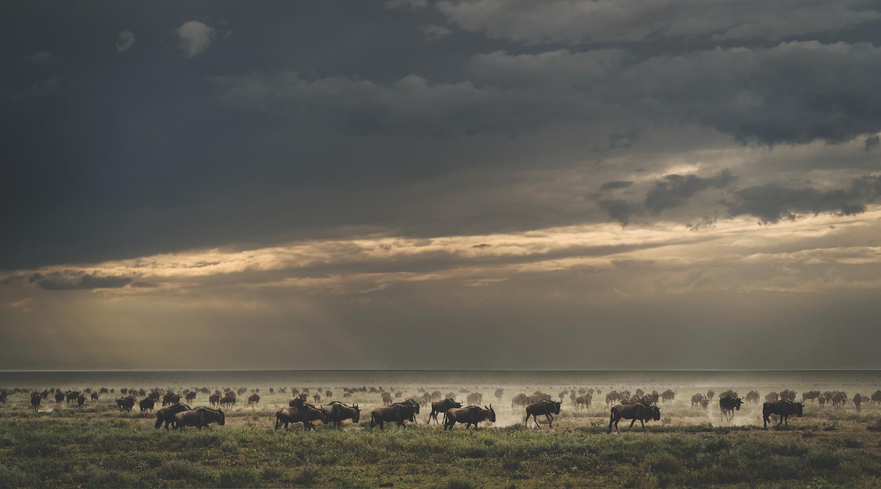 Courtesy Nomad Tanzania