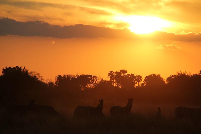Tubu zebra sunset